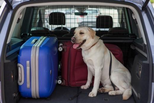 Estate In Vacanza In Auto Con Il Cane I Consigli Di Seat Video